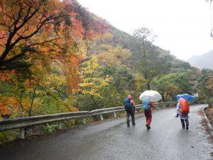 紅葉に囲まれた雨の林道歩きもいいものだ