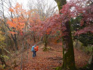 絵画の中にいるよう、見事な敷地山の紅葉