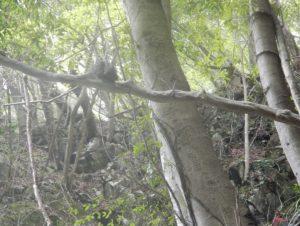 木の上に乗っかっている石。