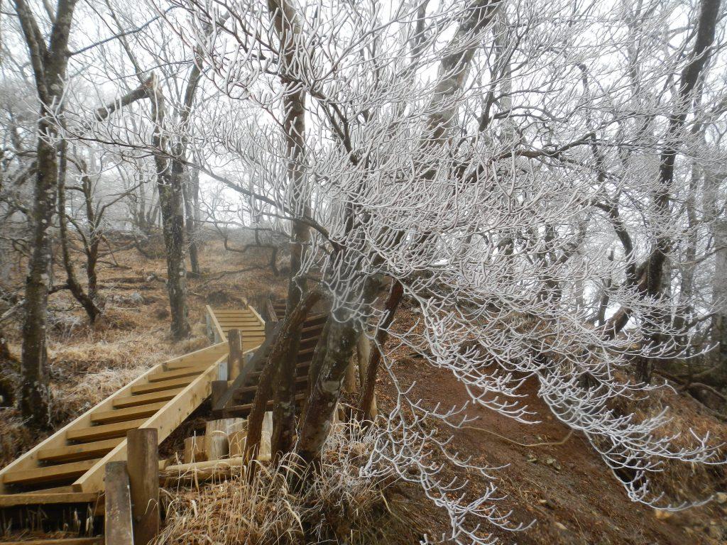 周りの木々にうっすらと霧氷が現れた