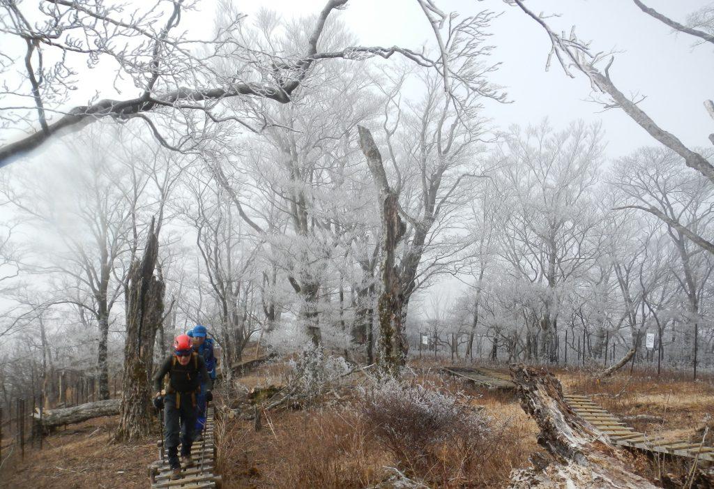 霧氷に囲まれた木道を歩く