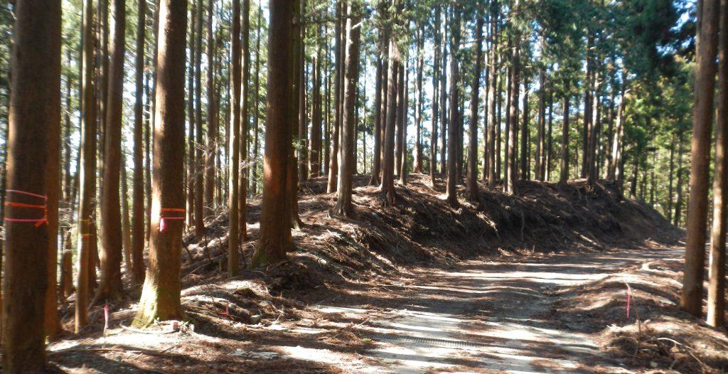 林道から人遠に下る尾根の入り口の木にテープが巻いてあった。