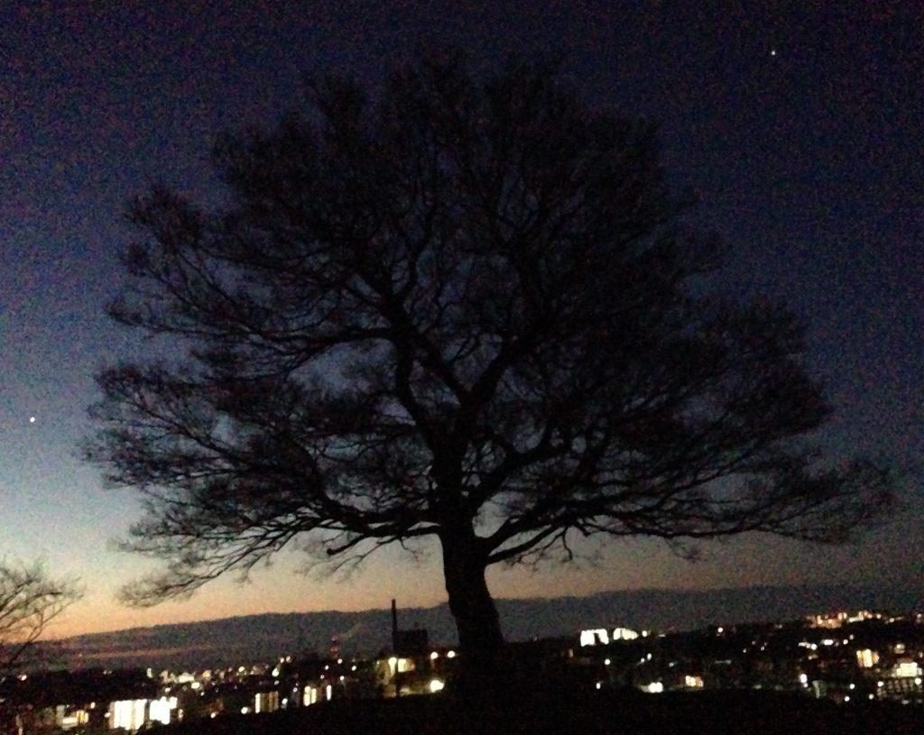 シンボルツリーの後ろ、磯子の空は白んできた。