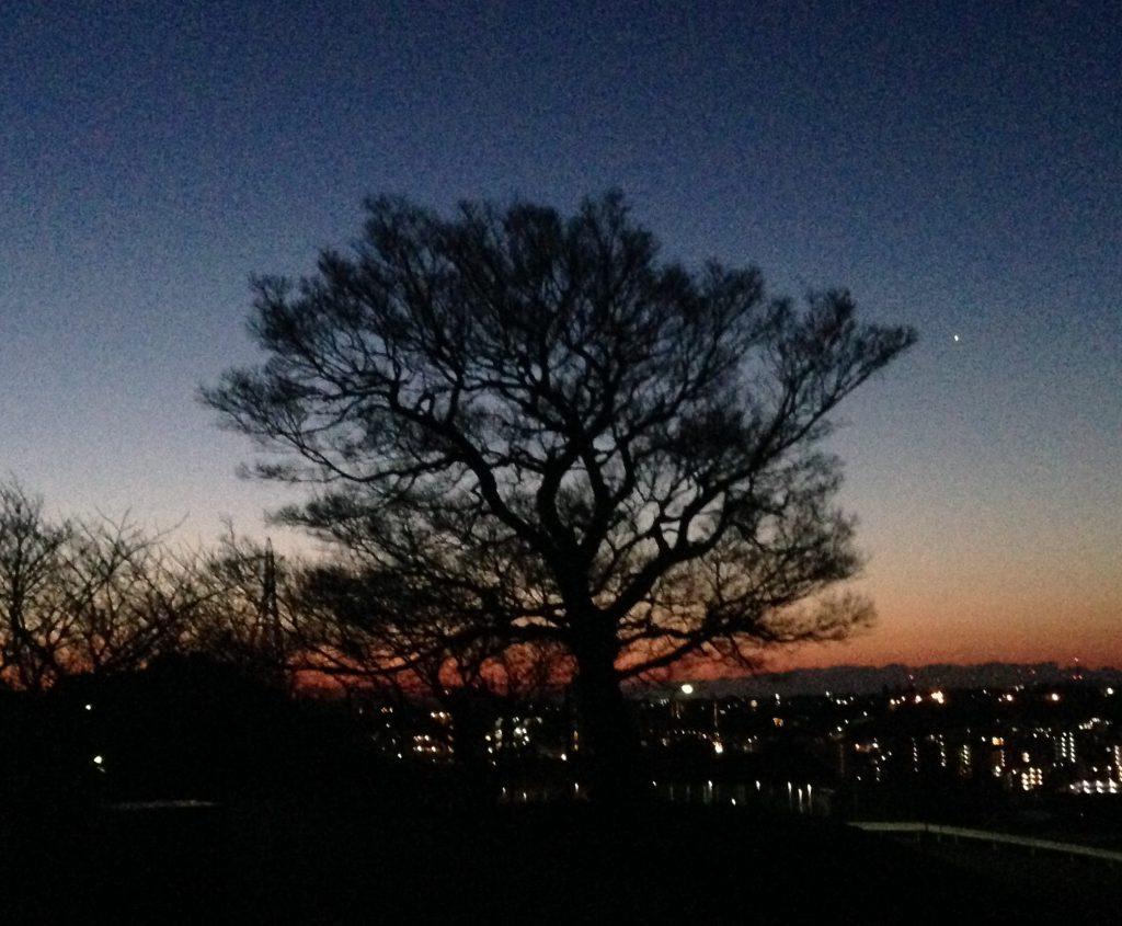 シンボルツリーと明けの明星