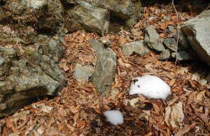 溶け残った雪