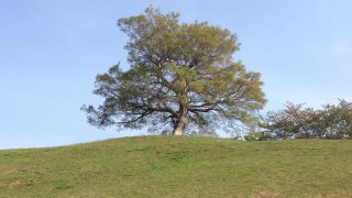 いつもの反対側の方向から見るシンボルツリー