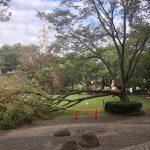 すり鉢広場の倒木