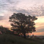 朝焼けシンボルツリー