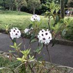 多目的広場近くに咲く花